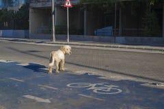 Πάροδος ποδηλάτων Οι στάσεις σκυλιών στο οδόστρωμα Στοκ φωτογραφίες με δικαίωμα ελεύθερης χρήσης