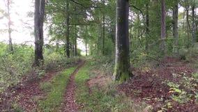 Πάροδος στο δάσος φιλμ μικρού μήκους