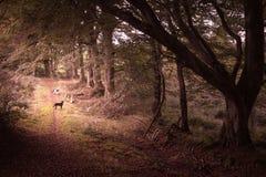 Πάροδος το φθινόπωρο Στοκ εικόνα με δικαίωμα ελεύθερης χρήσης