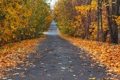 Πάροδος φθινοπώρου στο δάσος στοκ εικόνα