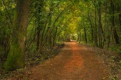 Πάρτε έναν περίπατο σε ένα ιταλικό ξύλο στοκ εικόνα με δικαίωμα ελεύθερης χρήσης
