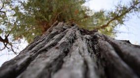 Πάρτε το φλοιό ενός δέντρου Φύση και υπαίθρια απόθεμα βίντεο