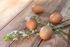 Πάσχα - ανθίζοντας κλάδοι με τέσσερα αυγά Στοκ Φωτογραφίες