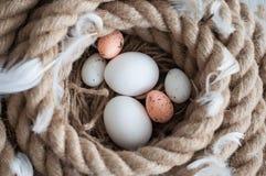 Πάσχα, αυγά, αυγά κοτόπουλου, αυγά ορτυκιών, αυγά, σχοινί, φωλιά, λευκό, φτερά Στοκ φωτογραφίες με δικαίωμα ελεύθερης χρήσης