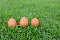 Πάσχα, αυγά στη χλόη Στοκ Εικόνες