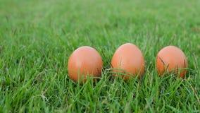 Πάσχα, αυγά στη χλόη Στοκ φωτογραφίες με δικαίωμα ελεύθερης χρήσης