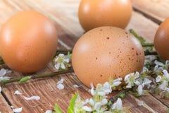 Πάσχα - λεπτομέρεια ενός αυγού της κότας με τα ανθίζοντας λουλούδια ανοίξεων Στοκ φωτογραφία με δικαίωμα ελεύθερης χρήσης
