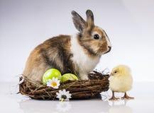 Πάσχα, κουνέλι, νεοσσός, κοχύλι Στοκ Εικόνα