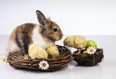 Πάσχα, κουνέλι, νεοσσός, κοχύλι Στοκ Εικόνες