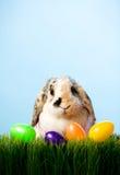 Πάσχα: Λαγουδάκι Πάσχας στη χλόη με το καλάθι των πλαστικών αυγών Στοκ εικόνα με δικαίωμα ελεύθερης χρήσης