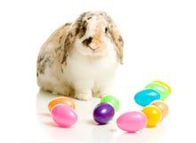 Πάσχα: Λαγουδάκι στο λευκό με τα ζωηρόχρωμα πλαστικά αυγά περίπου Στοκ εικόνες με δικαίωμα ελεύθερης χρήσης