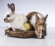 Πάσχα, νεοσσός, κοχύλι, αυγό, νεοσσός Στοκ φωτογραφία με δικαίωμα ελεύθερης χρήσης