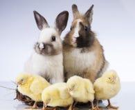 Πάσχα, νεοσσός, κοχύλι, αυγό Στοκ φωτογραφίες με δικαίωμα ελεύθερης χρήσης