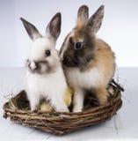 Πάσχα, νεοσσός, κοχύλι, αυγό Στοκ εικόνες με δικαίωμα ελεύθερης χρήσης