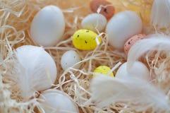 Πάσχα, χρωματισμένα αυγά, κίτρινος, άσπρα, σε έναν σανό, feathersa, αυγά κοτόπουλου, αυγά ορτυκιών, Στοκ εικόνα με δικαίωμα ελεύθερης χρήσης