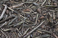 Πάτωμα μιας δασώδους περιοχής πεύκων Στοκ Εικόνες