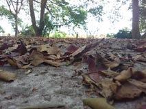 Πάτωμα που καλύπτεται με τα ξηρά φύλλα στοκ εικόνες