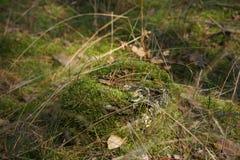 Πάτωμα του δάσους Στοκ Φωτογραφίες