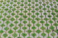 πάτωμα τούβλου Στοκ Φωτογραφία