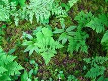 Πάτωμα τροπικών δασών στοκ εικόνες