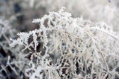 Πάχνη, στο χειμερινό δάσος Στοκ φωτογραφίες με δικαίωμα ελεύθερης χρήσης