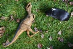 Πάλη αρπακτικών πτηνών τεράτων δεινοσαύρων παιχνιδιών με το ινδικό χοιρίδιο στην πράσινη χλόη Στοκ φωτογραφία με δικαίωμα ελεύθερης χρήσης