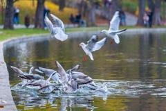 Πάλη γλάρων για τα τρόφιμα Στοκ εικόνες με δικαίωμα ελεύθερης χρήσης