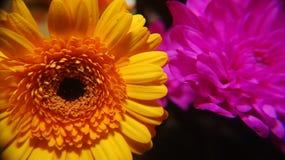Πάλη των λουλουδιών 2 Στοκ φωτογραφία με δικαίωμα ελεύθερης χρήσης
