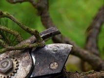 Πένσα κηπουρών που τακτοποιεί το δέντρο μπονσάι Καθαρίζοντας treetop Στοκ Εικόνες