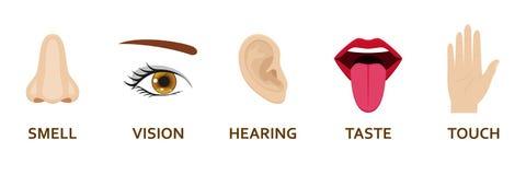 Πέντε ανθρώπινα εικονίδια αισθήσεων καθορισμένα Μύτη, μάτι, χέρι, αυτί και στόμα σχεδίου κινούμενων σχεδίων ελεύθερη απεικόνιση δικαιώματος