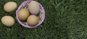 Πέντε αυγά βάζουν στη φωλιά στη χλόη στοκ φωτογραφία με δικαίωμα ελεύθερης χρήσης