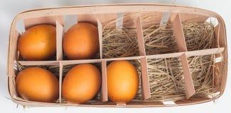 Πέντε αυγά σε ένα κιβώτιο χαρτοκιβωτίων Στοκ Εικόνα