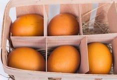 Πέντε αυγά σε ένα κιβώτιο χαρτοκιβωτίων Στοκ φωτογραφίες με δικαίωμα ελεύθερης χρήσης