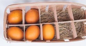 Πέντε αυγά σε ένα κιβώτιο χαρτοκιβωτίων Στοκ Φωτογραφία
