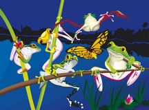 Πέντε βάτραχοι που αναρριχούνται στη νύχτα Στοκ Εικόνες