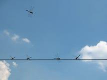 Πέντε λιβελλούλες σε ένα καλώδιο Στοκ φωτογραφίες με δικαίωμα ελεύθερης χρήσης