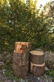 Πέντε κούτσουρα που τακτοποιούνται για τη συσσώρευση Στοκ Φωτογραφία