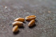 Πέντε ξηρά σιτάρια σίτου κλείνουν επάνω στο θολωμένο καφετή καμβά Στοκ φωτογραφία με δικαίωμα ελεύθερης χρήσης