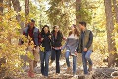Πέντε φίλοι που απολαμβάνουν ένα πεζοπορώ σε ένα δάσος, Καλιφόρνια, ΗΠΑ Στοκ Εικόνες