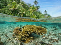 Πέρα από κάτω από το τροπικό κοράλλι βλάστησης υποβρύχιο Στοκ φωτογραφία με δικαίωμα ελεύθερης χρήσης