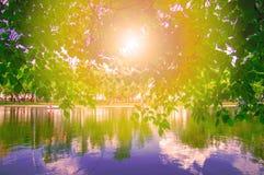πέρα από την ανατολή ποταμών Οι ακτίνες του θερινού ήλιου πρωινού λάμπουν μέσω του φυλλώματος των δέντρων στον ποταμό ακτών Στοκ Φωτογραφία