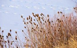 πέρα από την παγωμένη λίμνη φθάσ& Στοκ Εικόνα