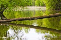πέρα από το δέντρο ποταμών Στοκ φωτογραφίες με δικαίωμα ελεύθερης χρήσης