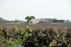 Πέρα από το φράκτη που κοιτάζει προς το αγρόκτημα στοκ φωτογραφίες