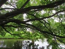 πέρα από το ύδωρ δέντρων Στοκ εικόνες με δικαίωμα ελεύθερης χρήσης
