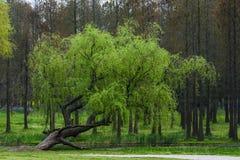 πέρα από το ύδωρ δέντρων Στοκ Εικόνες