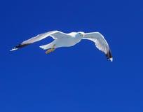 πέρα από seagull θάλασσας Στοκ φωτογραφία με δικαίωμα ελεύθερης χρήσης