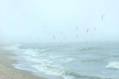 πέρα από seagulls θάλασσας Στοκ Εικόνες