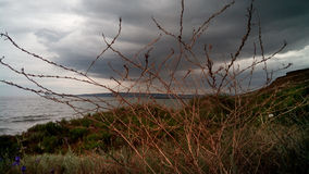 Πέρυσι χλόη και νέα χλόη στην ακτή, Κριμαία Στοκ φωτογραφία με δικαίωμα ελεύθερης χρήσης