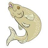 πέστροφα άλματος ψαριών Στοκ εικόνα με δικαίωμα ελεύθερης χρήσης